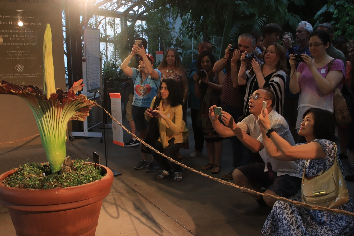 Visitors view the Corpse Flower in bloom