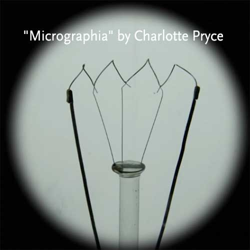 Micrographia by Charlotte Pryce