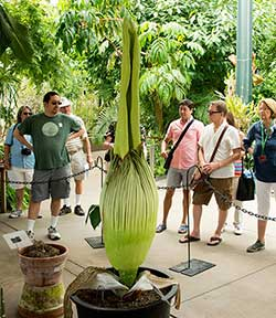 visitors looking at the Corpse Flower
