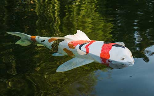Koi-shaped sculpture in lake