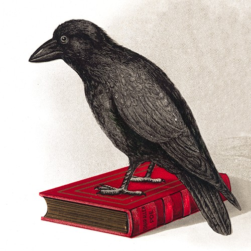 Illustration of raven on red book