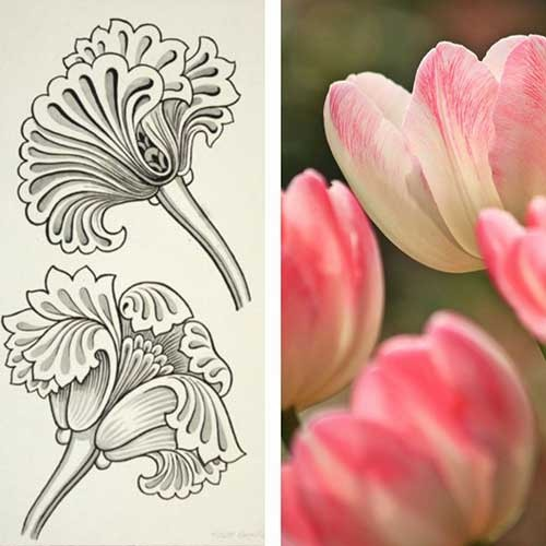 Stylized tulip design and pink tulip blooms