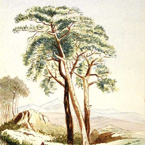Landscape with Trees by Joseph Basil Girard