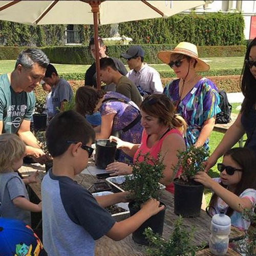 Kids bonsai workshop