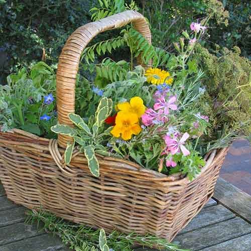 Basket full of herbs