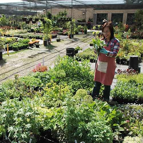 Volunteer at plant sale
