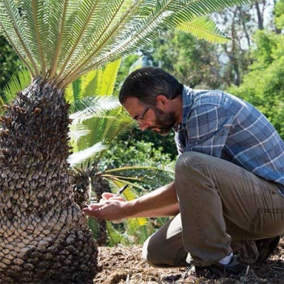 Man inspecting cycad