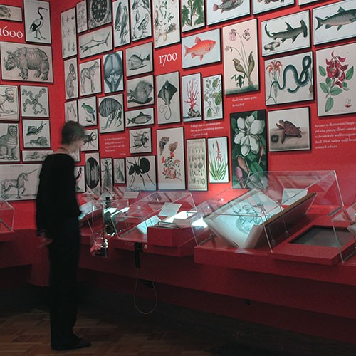visitor looking at display in a gallery
