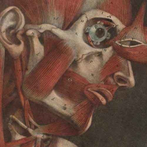 Detail of 18th century anatomy book