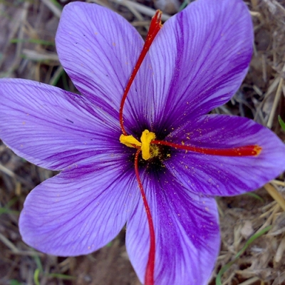 purple flower with six petals