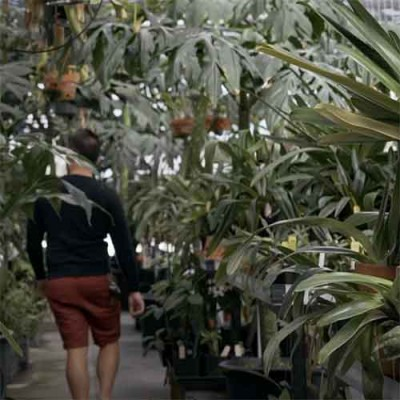 Inside tropical greenhouse
