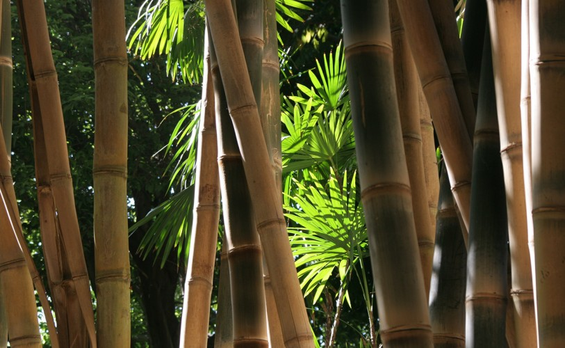 bamboo shoots grow near the Jungle Garden