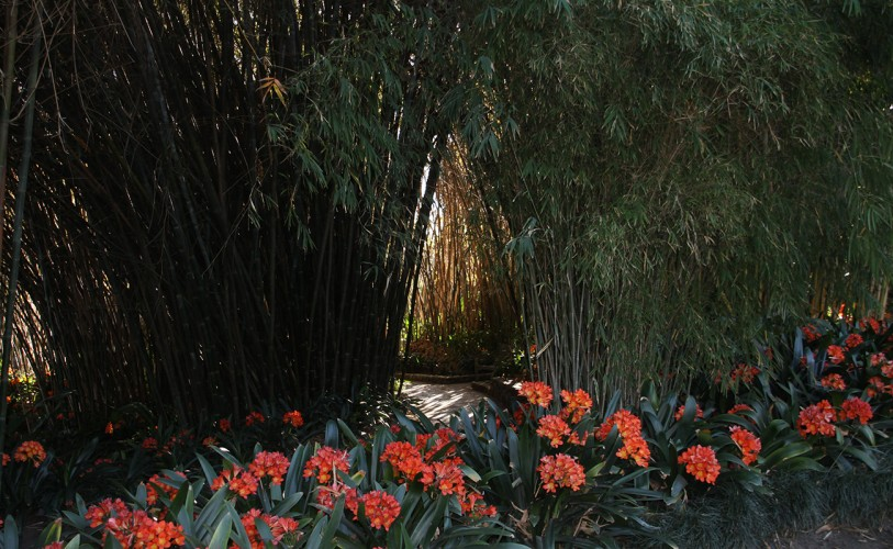 a bamboo path connects the lily ponds to the Jungle Garden