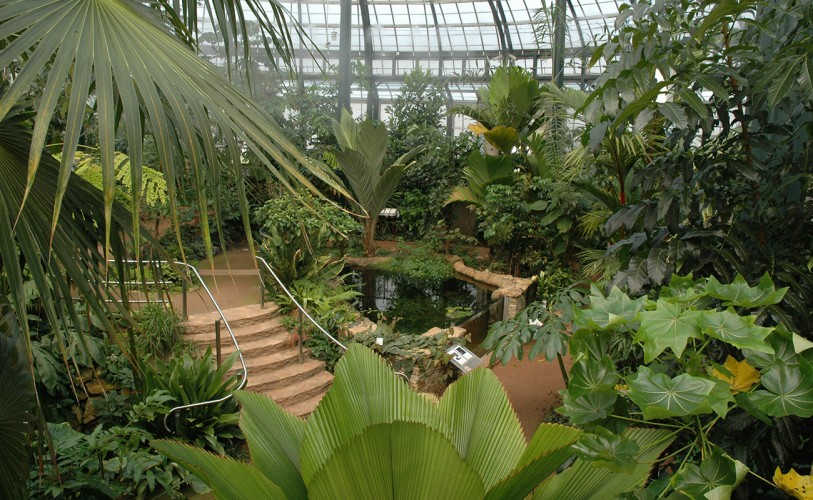 inside the conservatory showing hundreds of plants