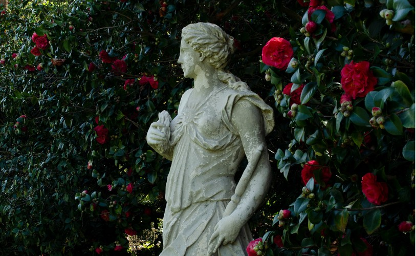 sculpture of woman next to pink camellia blossoms