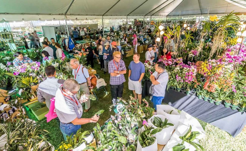 Crowd of people at orchid show