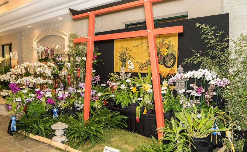 Large orchid display