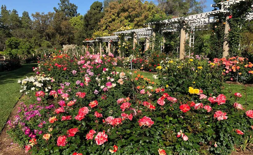 Overview of blooming Rose Garden