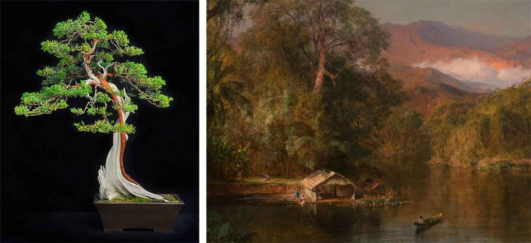 Left: California juniper bonsai (Juniperus californica), styled from plant material approximately 500 years. Photo by Andrew Mitchell. Right: Frederic Edwin Church, Chimborazo, 1864 (detail.) The Huntington Library, Art Museum, and Botanical Gardens