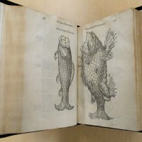 Ulisse Aldrovandi (1522-1605), Monstrorum Historia, 1642. The Huntington Library, Art Museum, and Botanical Gardens.