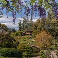 Created in 1912, the Japanese Garden features a small lake spanned by a moon bridge, a traditional house, and trellises of wisteria that bloom in early spring. Photo: Martha Benedict. The Huntington Library, Art Museum, and Botanical Gardens.
