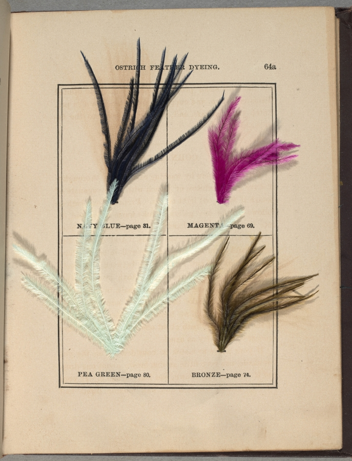 Printed book with dyed ostrich feathers affixed to pages