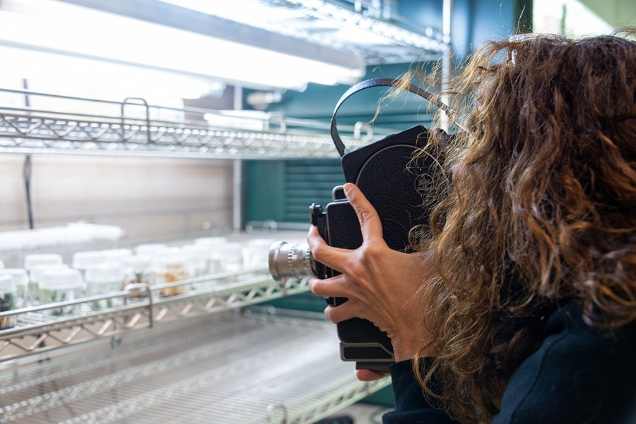 Beatriz Santiago Muñoz conducting research in the cryopreservation lab at The Huntington. Photo: Kate Lain. The Huntington Library, Art Museum, and Botanical Gardens.