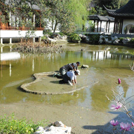 Crews working on the pond in the Chinese garden