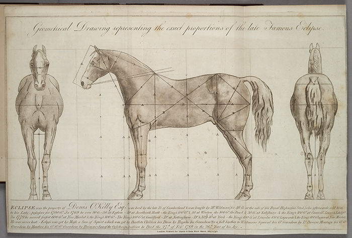 The Lasker collection is proof that California Chrome is more than a West Coast novelty but the latest in a long line of horses to capture the public's imagination, including Eclipse, a British Thoroughbred that went undefeated in 1769 and 1770. From Charles Vial de Sainbel, An Essay on the Proportions of Eclipse (London: Martin and Bain, 1795).
