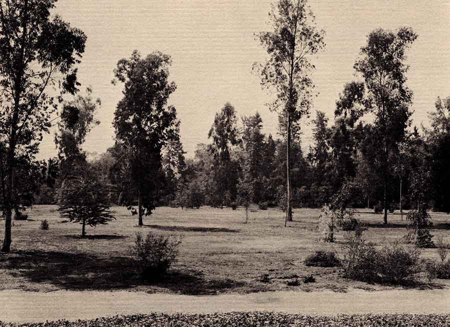 "The Australian Garden, featured in a February 1970 story, showcases plants from ""down under"" that are suitable for Southern California's climate. This landscape introduced many now-popular plants (such as kangaroo paws) to local gardeners. The Huntington Library, Art Museum, and Botanical Gardens."