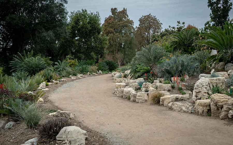 The wide path of the cycad walk is accessible to all visitors. Photo by Jessica Pettengill.